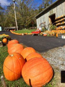 Harvest Barn - Pumpkin Patches Open