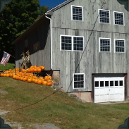 More pumpkins outside the Barn